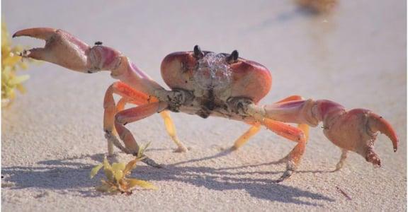 猴子管理、螃蟹效應,職場最常見的十種「動物行為」