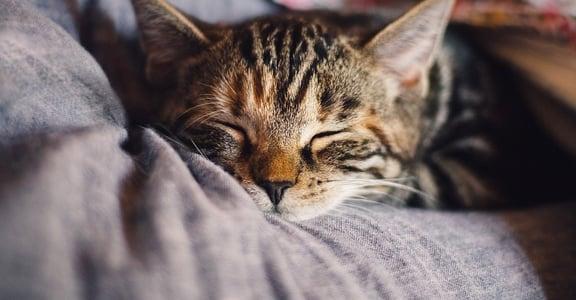 「他愛你,他也是自由的」:愛一隻貓,也像練習如何愛一個人