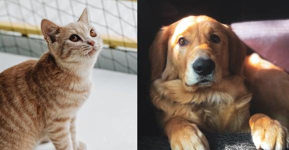 【那些毛孩教會我的事】「天塌下來還有我擋著,繼續睡吧」讀者留言:貓狗教會我如何愛