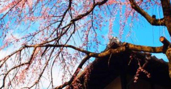 值得慢慢走、細細品味的京都