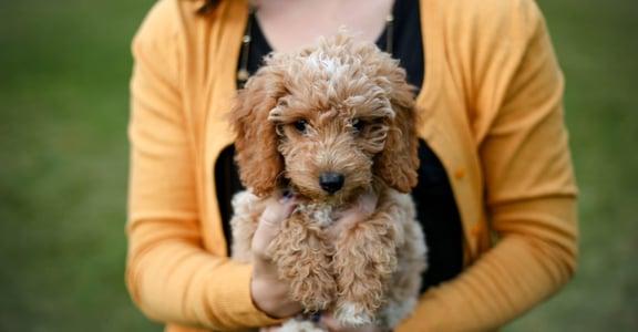 愛狗就像是愛人,要理解、要調整、要用適合牠的方式讓牠快樂
