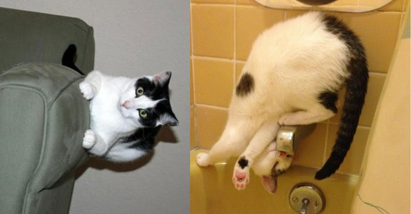 臣服吧,人類:10 張圖證明貓貓不受物理定律規限