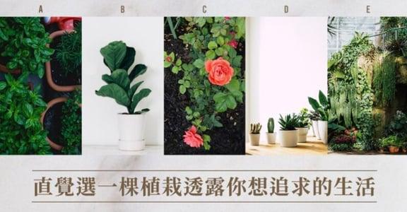 心理測驗|選一棵植物,透露你目前的心靈狀態,與追求的生活方式