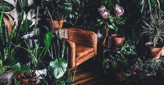 為生活打造一點綠意盎然!5 個植栽 IG 推薦:生活風格,都在巧妙的不經意裡發生