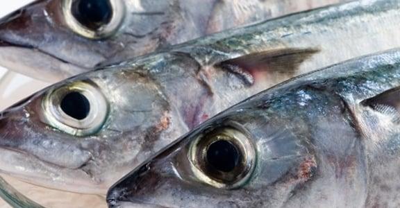 守護細胞的海鮮素食療法──從過敏到癌症都適用