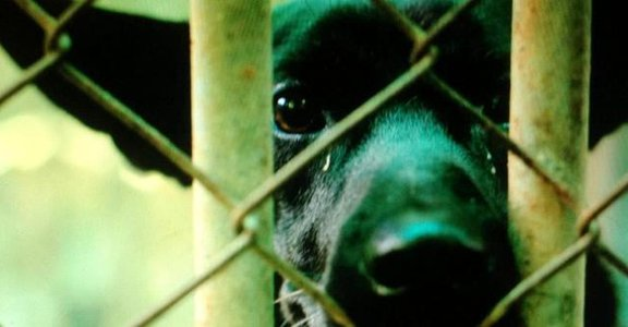 【十二夜】:狗狗最脆弱人性最黑暗的漫漫長夜