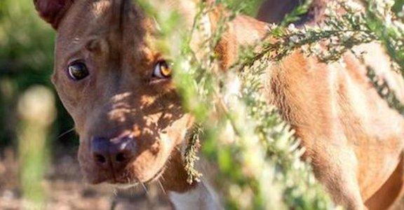 流浪狗狗攝影集:我們只不過想要有個家