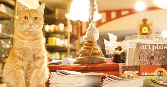 【年末出遊選】喵嗚,去咖啡廳找貓咪玩