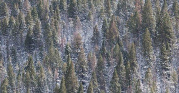 【女人迷 X 誠品站】走進挪威的森林,尋找逝去的愛情