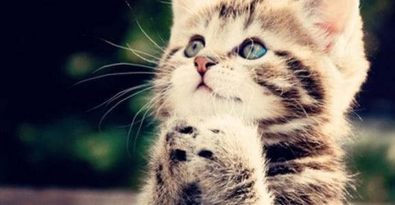 幸福貓奴生活5提案:打造你與貓咪的愛巢