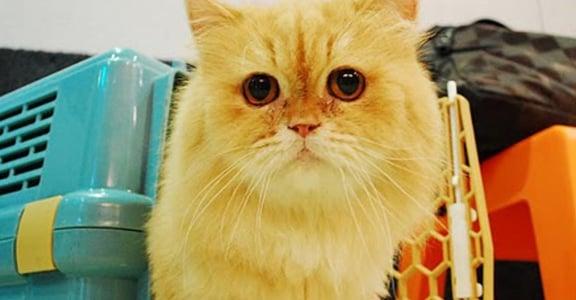 【communiCATion 我聽貓說的】貓咪不怕出門