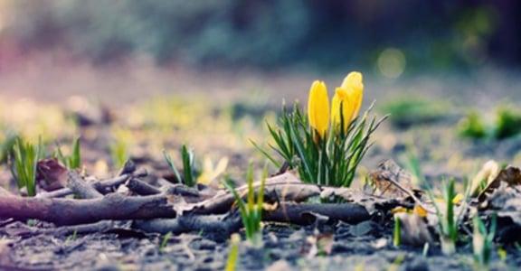 春暖花開好時節!八首融冰系溫暖歌單