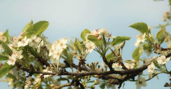 成熟是看見花開的燦爛,懂得花謝的美
