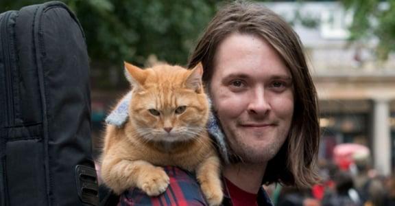那些年我們追過的臭臉貓!網路爆紅的十隻明星貓
