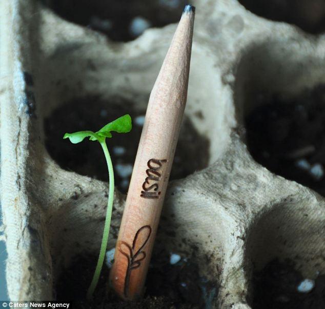 pencilsprout