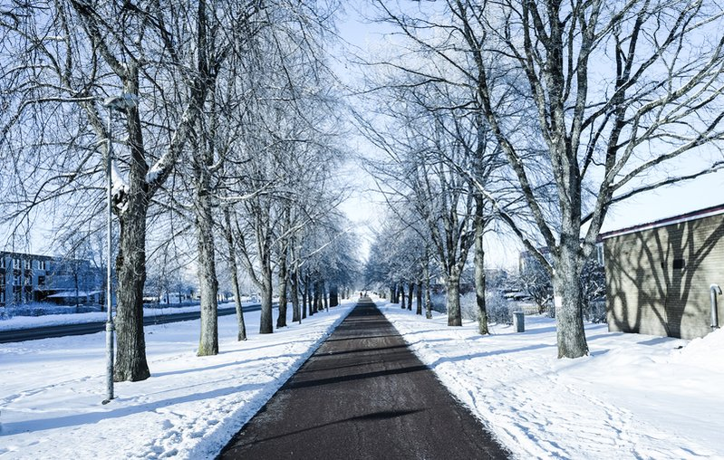 [The Tree Path of Ryd , Sweden  2013 Jan ]