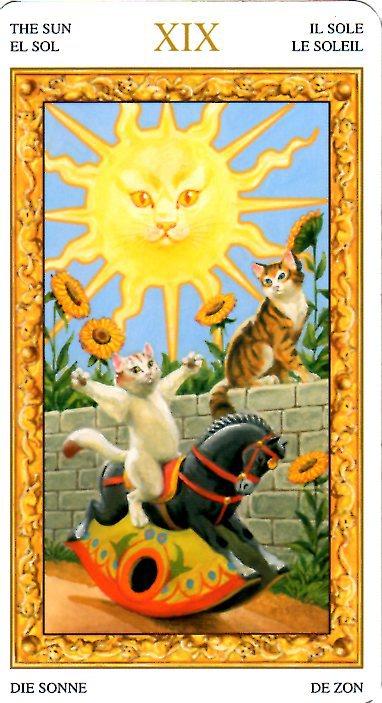 白貓塔羅趣味占卜