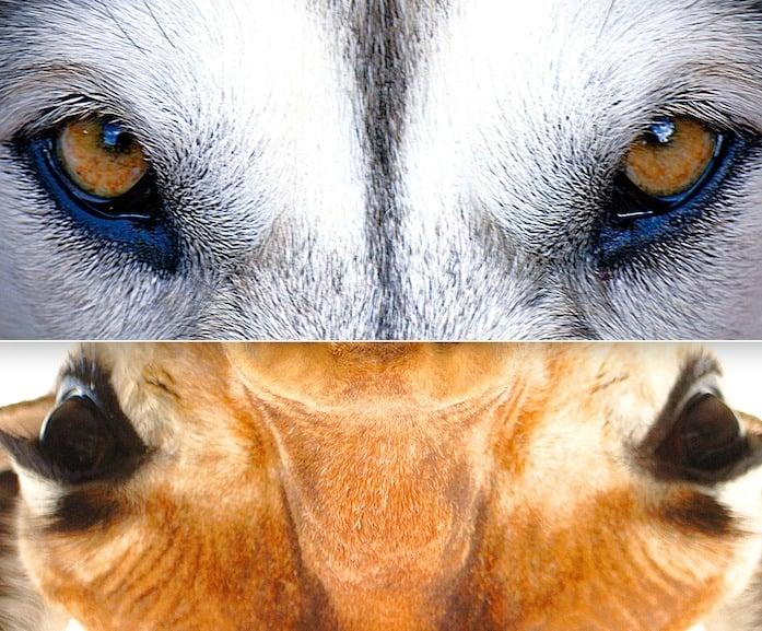 狼的溝通 長頸鹿的溝通