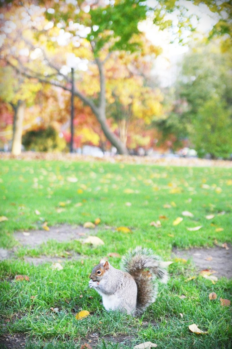 boston-common-public-garden-autumn-11