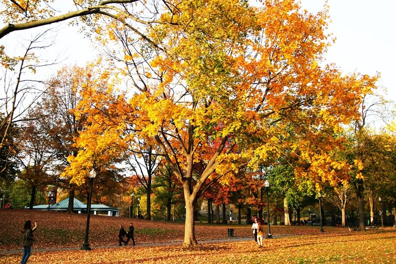 boston-common-public-garden-autumn-5