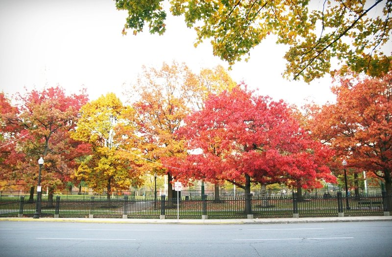 波士頓秋天 boston-common-public-garden-autumn-19