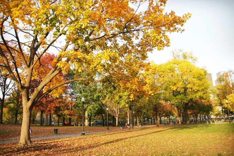 boston-common-public-garden-autumn-6