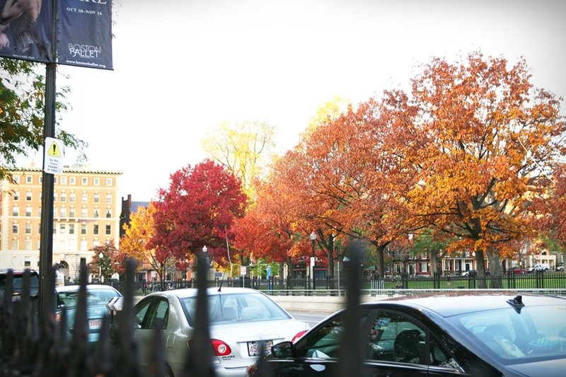 boston-common-public-garden-autumn-16