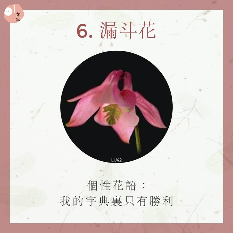 6.漏斗花