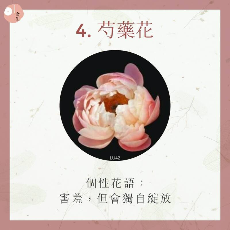 4.芍藥花