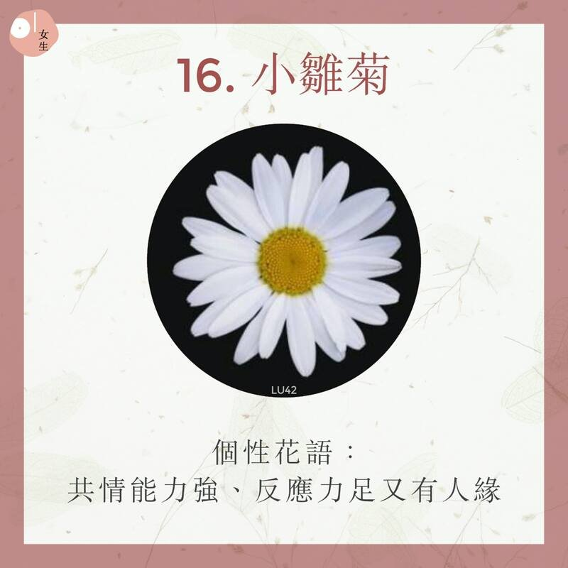 16.小雛菊