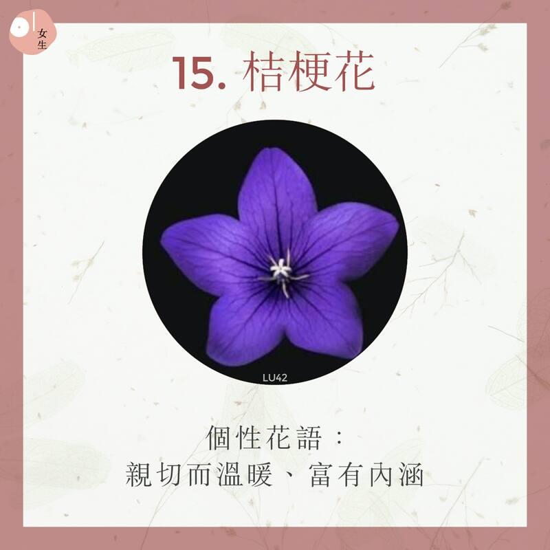15.桔梗花