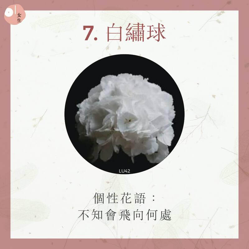 7.白繡球