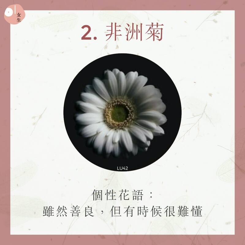 2.非洲菊