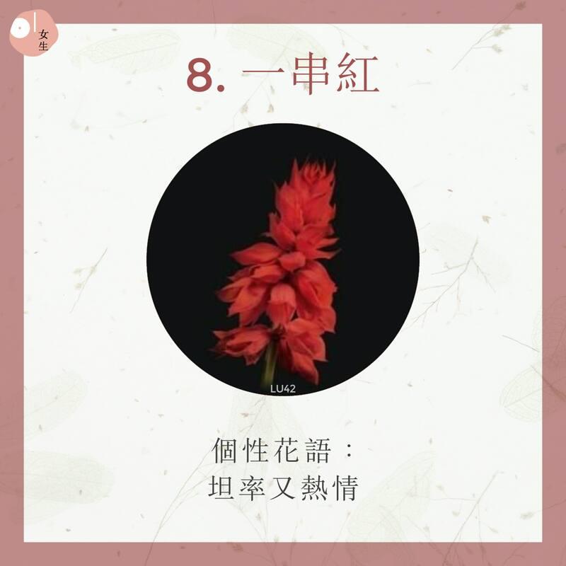 8.一串紅