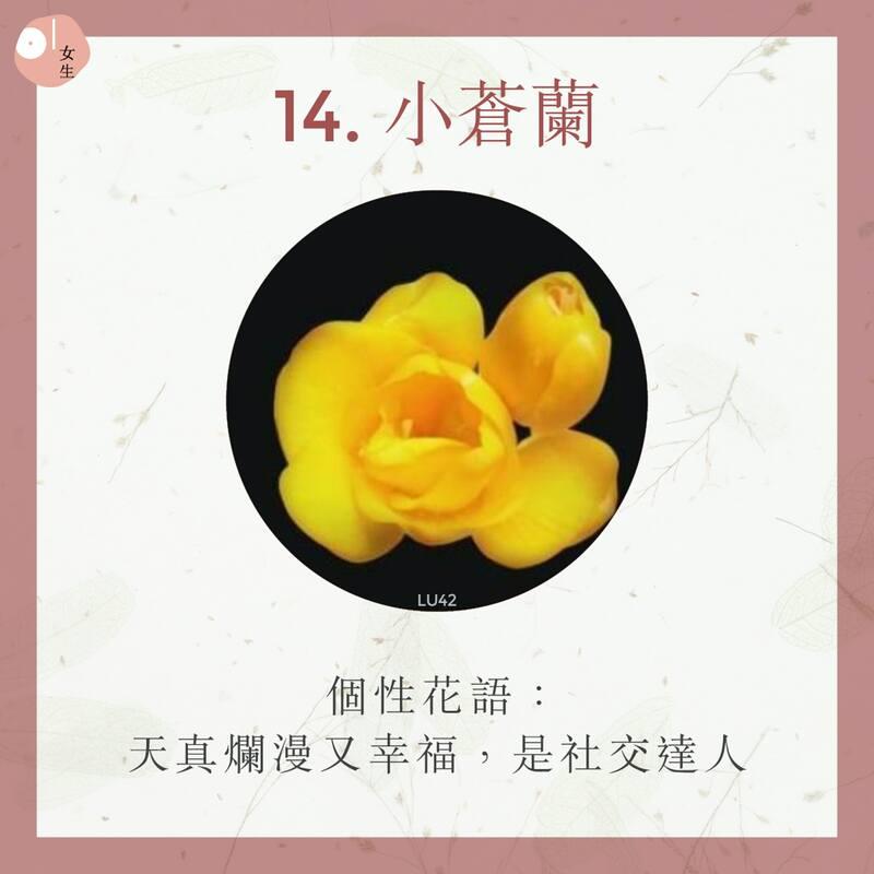 14.小蒼蘭
