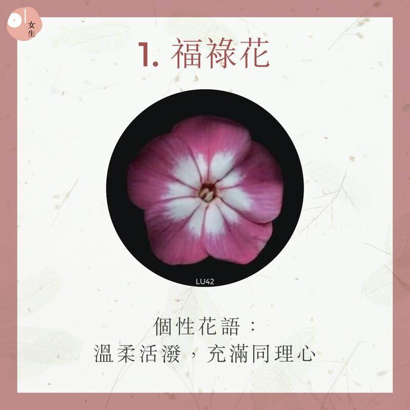 1.福祿花