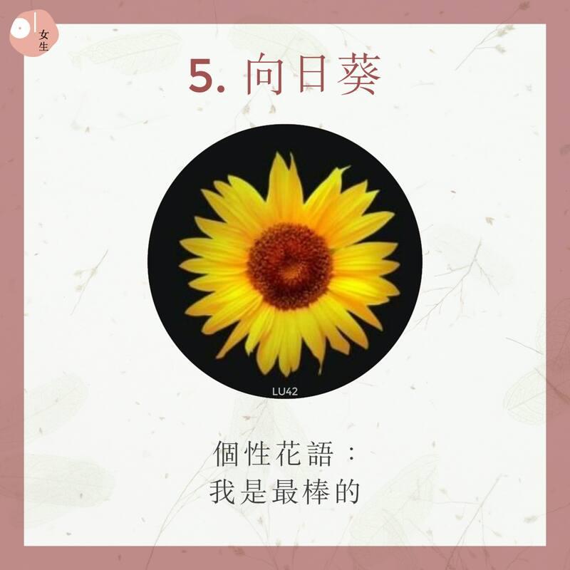 5.向日葵