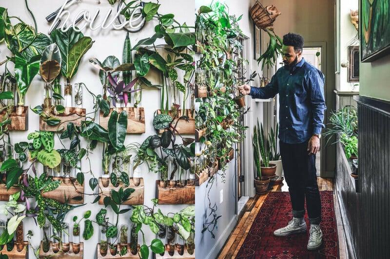 走廊有自己做的植物牆。