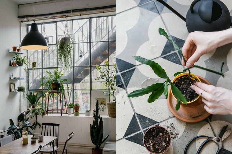 服務內容是協助商業、私人空間的植物規劃。