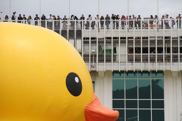 Rubber Duck、黃色小鴨、香港、Hong Kong