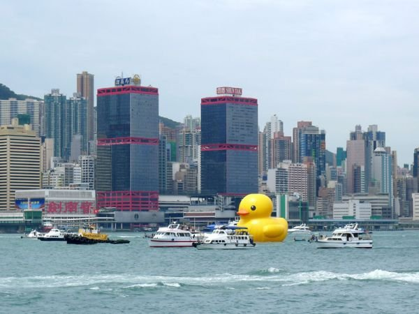 rubber duck、hong kong