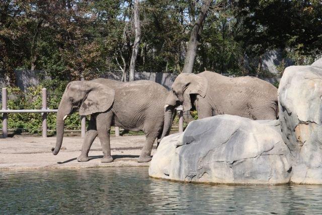 手作時光:動物勞作~動物園系列