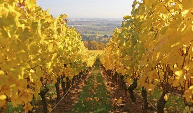 一起舉杯!全球十大紅酒產地及旅遊地點