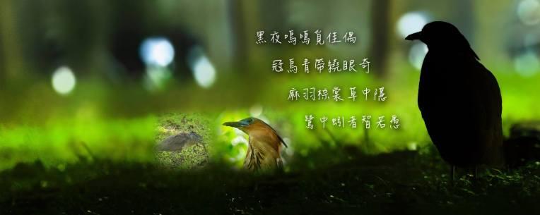 圖六_黑冠麻鷺